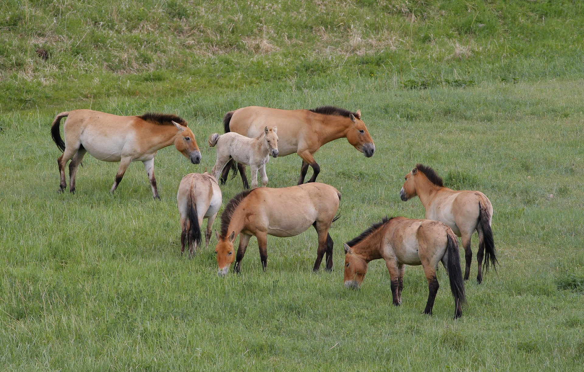 Mongolia Mammal Watching Tour